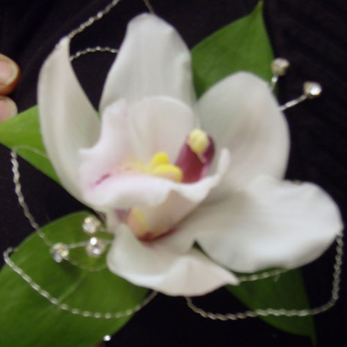 Single cymbidium orchid buttonhole