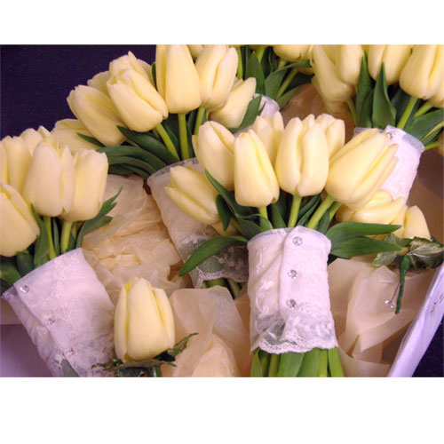 Compacted posy of cream tulips and lace band