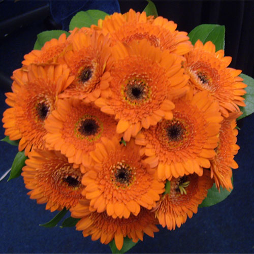 Handtied posy of Orange germini